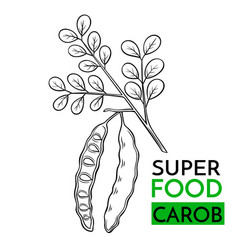 icon superfood carob vector image