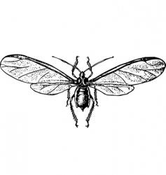 aphidinea vector image