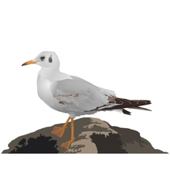 Seagull stands on stone isolated on white vector