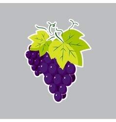 Flat grape icon on a gray background vector