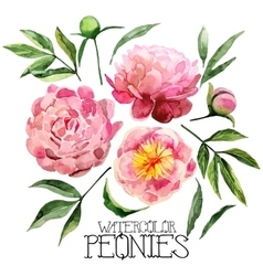 Watercolor peonies set vector image