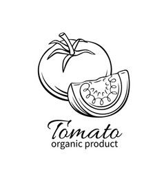 hand drawn tomato icon vector image vector image