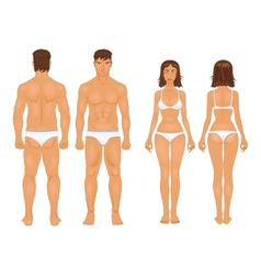 healthy body type of man and woman in retro colors vector image