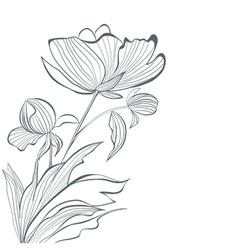 Stylized Peony flowers vector image vector image