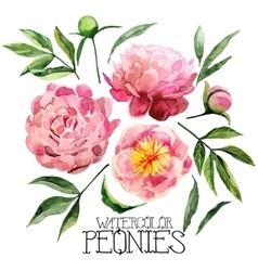Watercolor peonies set vector image vector image