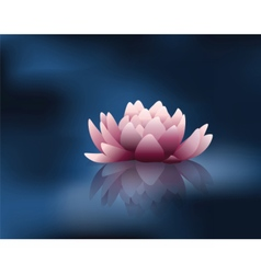 Water lily flower with reflection vector