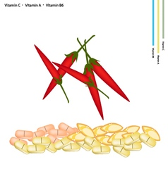 Red chili peppers with vitamin c vitamin a and b6 vector