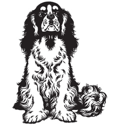 Cavalier king charles spaniel black white vector