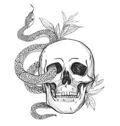 Skull and Snake Vintage vector image