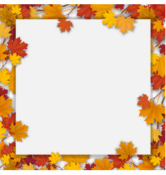 White blank with autumn maple leaves vector
