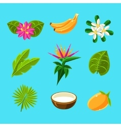 Tropical plants and fruits collection vector