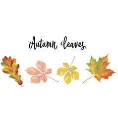 with different autumn leaves vector image vector image
