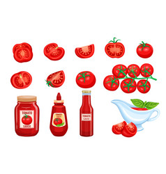 set red tomato vegetables sauce vector image