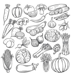 Hand drawn vegetables icons set vector
