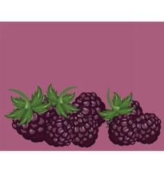 Blackberries delicious background vector