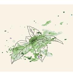 Mint sketch vector