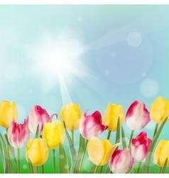 Tulips in garden on blue sky background EPS 10 vector image