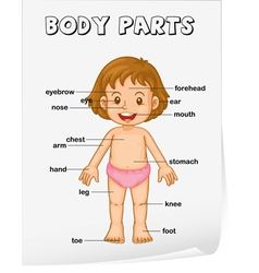 Body parts poster vector
