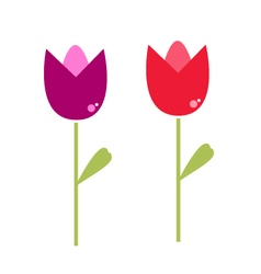 Beautiful two Tulips isolated on white vector image