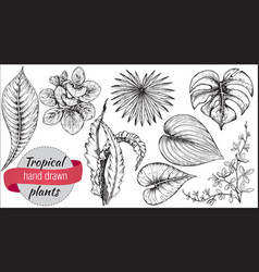 collection of hand drawn tropical flowers vector image