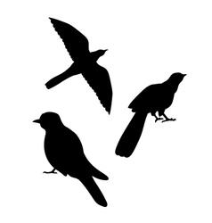 Cuckoo bird silhouettes vector image vector image