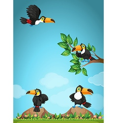 Four toucans flying in the garden vector image vector image