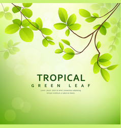 Fresh tropical green leaves on natural vector