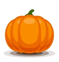 Orange pumpkin vector image