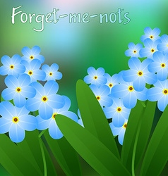 Meadow with forget-me-nots blooming blue beautiful vector