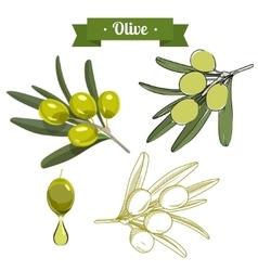 Set of green olives 1 vector image