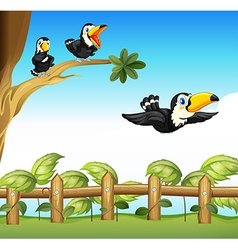 The three birds vector image