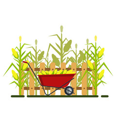 Yellow corn in red wheelbarrow with fence vector