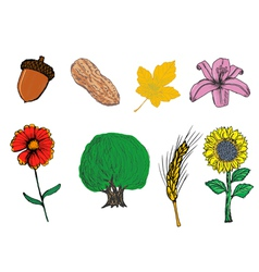 Plants vector