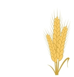 Modern wheat background vector