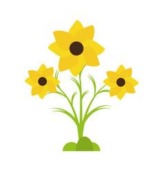 Nasturtium petal spring beauty vector