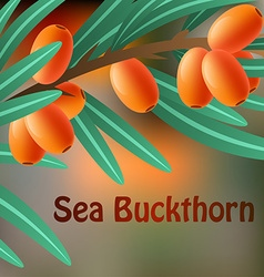 Orange juicy therapeutic sea-buckthorn on a branch vector image