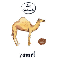 arabian dromedary camel vector image vector image