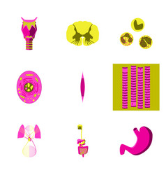 Icons set in flat style human biology vector