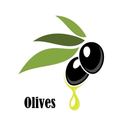 Ripe black olives on a leafy twig with oil vector