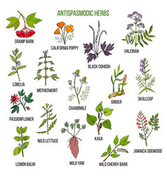 Antispasmodic herbs hand drawn set of medicinal vector