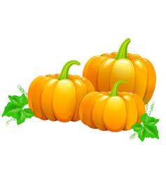 Three beautiful ripe pumpkins vector