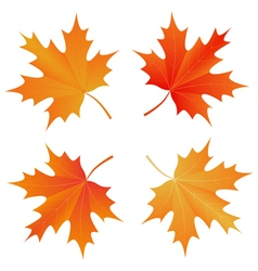 Set of autumn maple leaf vector