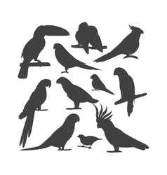 Cartoon parrots isolated birds vector image