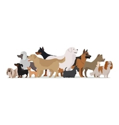 Group of Different Breeds Dogs vector image vector image