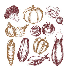 Vegetables - colored hand drawn vector