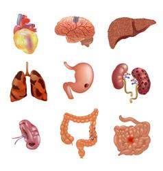 Realistic sick human organs set anatomy vector