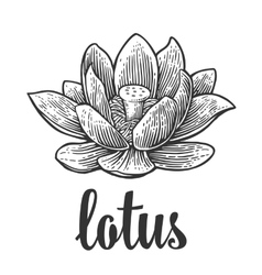 Lotus flower black engraving vintage vector image
