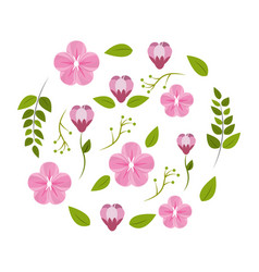 Flower and roses plants decoration vector