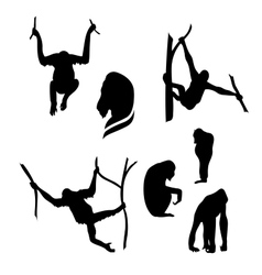 Orangutan monkey silhouettes vector image vector image