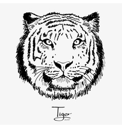 tiger black vector image
